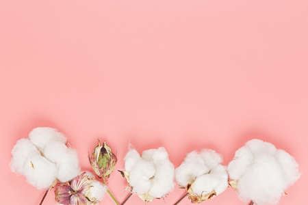 flat lay image of cotton balls on pink, copy space