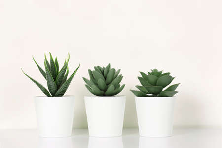 white pots with succulents and cactus on reflective shelf against white wall Zdjęcie Seryjne