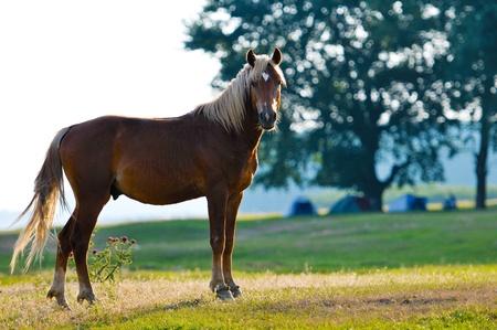 snotty: A wild horse head profile portrait Stock Photo