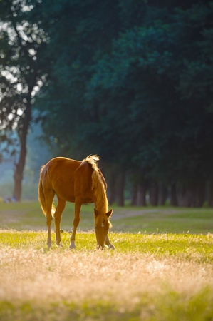 horses in field: A wild horse head profile portrait Stock Photo