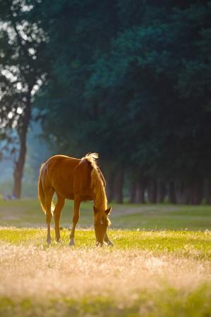 A wild horse head profile portrait Stock Photo