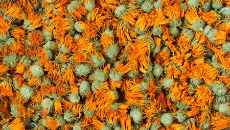 anoint: Dried marigold Stock Photo