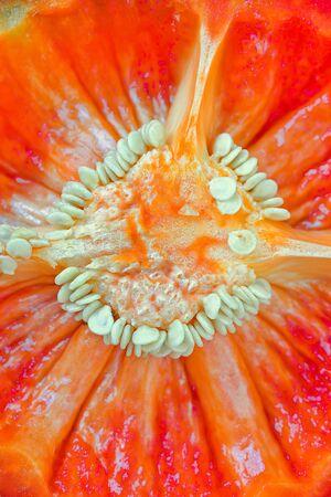Macro red paprika Stock Photo - 15083613