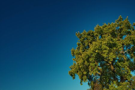 ablooming: Tree in the sky