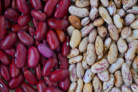 Close-up dry white and red beans on natural light Stock Photo - 15554676