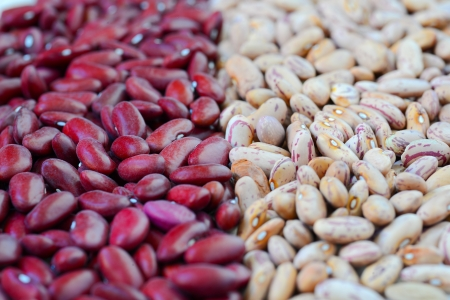 Close-up dry white and red beans on natural light Stock Photo - 15566904