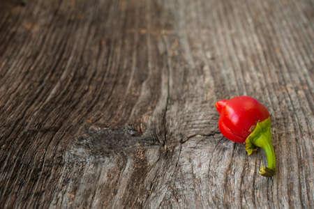 Red paprika Stock Photo - 15677999