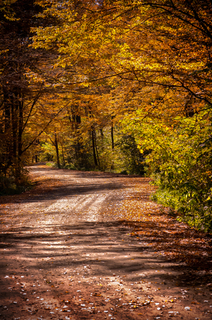 Autumn road with a beautiful light and deep shadow