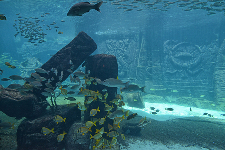 Underwater panorama with rocks, coral; reef and fishes  photo