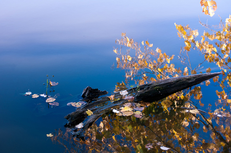 Piece of wood floating in a lake with leaves and reflection