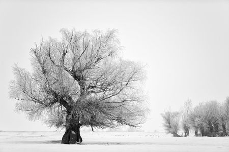 Beautiful tree in winter time