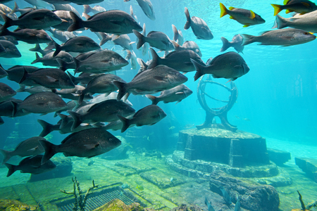 Underwater scene with a lot of colorful fish photo