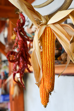 Corn left hanging to dry in natural light photo