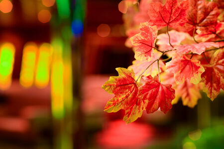 dim light: Red leaf with dim light on a colorful background Stock Photo