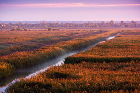 danubian: Sunrise in the Danube Delta channel water and vegetation Stock Photo