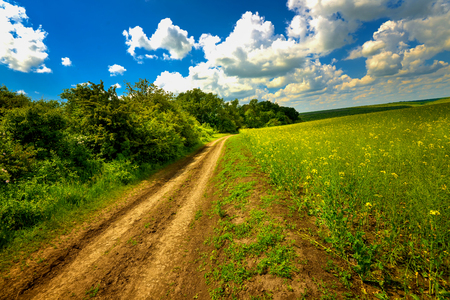 Rape land and road with a rich blue sky on a summer day photo