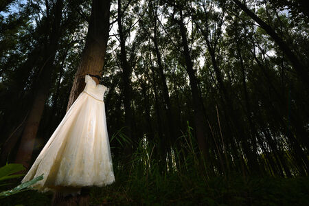 hanged woman: White Wedding Dress hanged in a forest