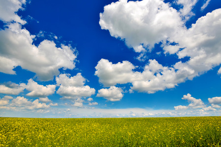 Rape land with a rich blue sky on a summer day photo