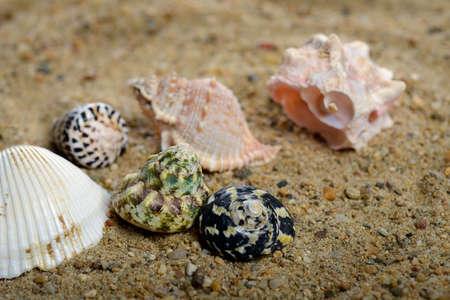 Shells on sand background Stock Photo