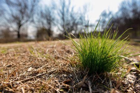 tuft: Tuft of green grass in autumn landscape