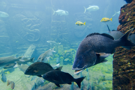reef fish: Colorful fish swimming in a reef Stock Photo