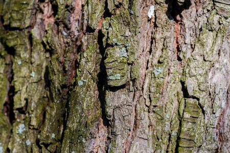 harsh light: Tree bark in natural and harsh light Stock Photo