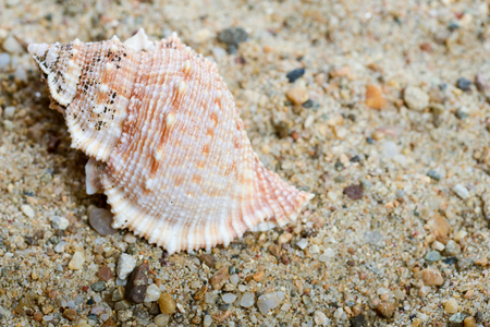 Seashell on the sand in natural light Stock Photo