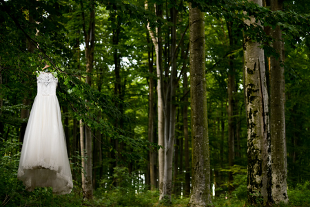 Wedding dress hanging in tree in natural light