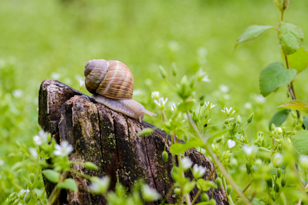 Snail on the stump in nature in daylight