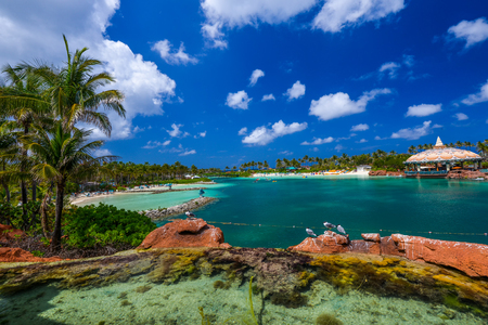 Beach with palm trees and crystal clear water in natural light Stock Photo