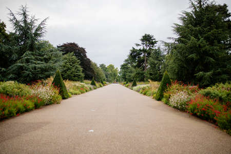 Landscape View of a Long Path Surrounded by Trees and Under a Cloudy Sky