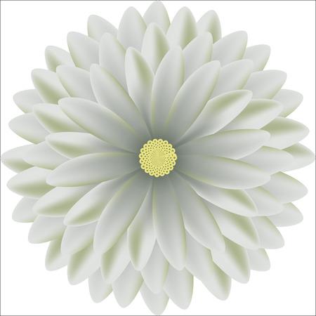 tierno: Tender patrones circulares crisantemo florales realista