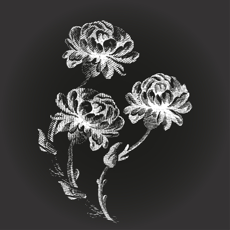 peony black: Bouquet flowers Peony vintage on black background illustration realistic sketch Illustration