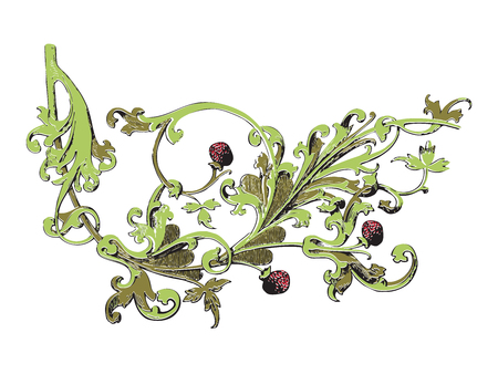 line drawing: Hand drawn illustration of strawberry bushes vector. Branch with buds and berries. Vegetal ornament colorful on white background