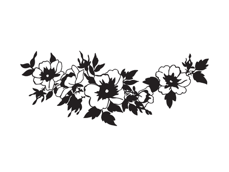 blossoming: Beautiful blossoming wild rose branch with white flowers. Hand drawn vector illustration. Black and white colors