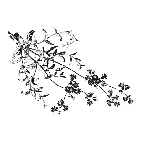 field flowers: Botanical hand drawn branches with flowers isolated, herbal flowers isolated on white background vector illustration Illustration