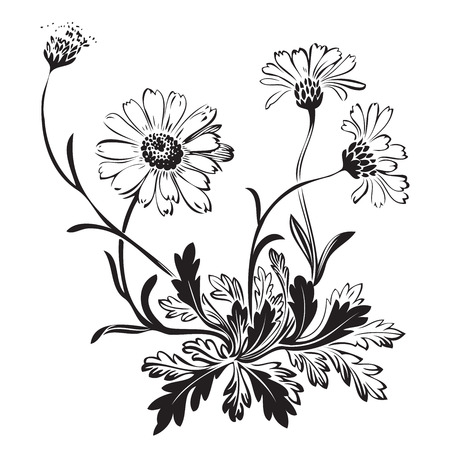 Hand drawn bouquet of chamomile flowers isolated on white background, black and white colors. Vector illustration