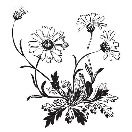 Main bouquet tiré de fleurs de camomille isolé sur fond blanc, noir et blanc. Vector illustration Banque d'images - 55627875