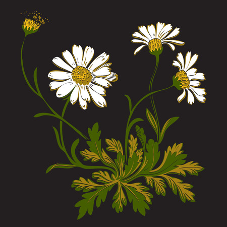 Hand drawn colorful bouquet of chamomile flowers isolated on black background. Vector illustration
