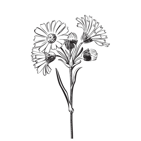 白背景、黒と白の色に分離したデイジーの花の手描きの花束。ベクトル図