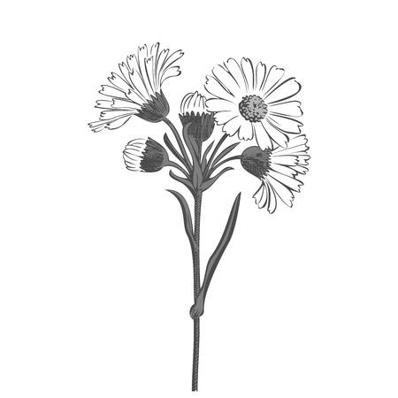 Berühmt Blumen Zu Färben Fotos - Beispiel Business Lebenslauf Ideen ...