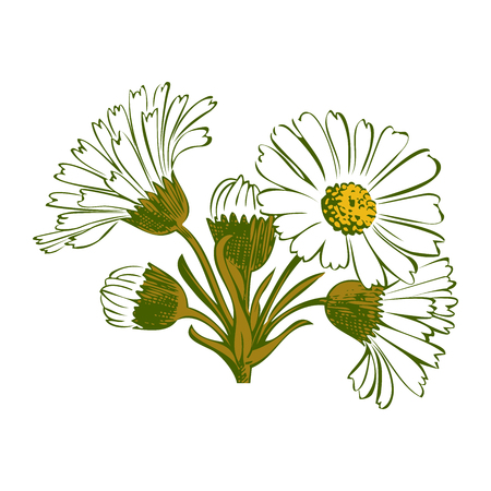 dashes: Hand drawn colorful bouquet of chamomile flowers isolated on white background. Vector illustration