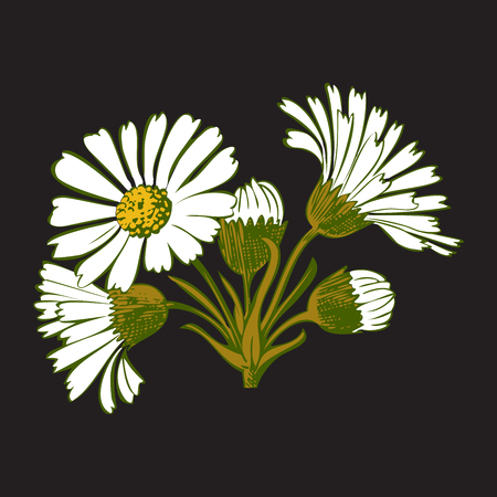 dashes: Hand drawn colorful bouquet of chamomile flowers isolated on black background. Vector illustration