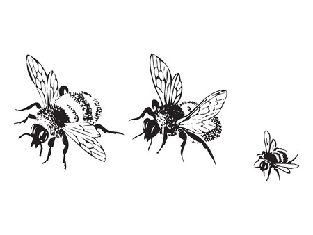 black and white line drawing: Vector engraving antique illustration of honey flying bees, isolated on white background. Set of flying bees in a row