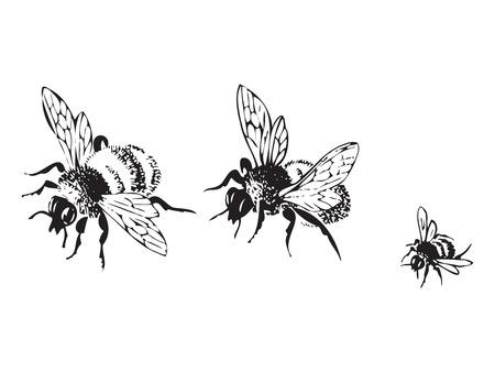 dessin noir et blanc: Vector gravure illustration antique des abeilles volant, isolé sur fond blanc. Définir des abeilles volant dans une rangée