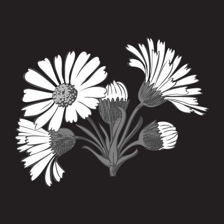 dashes: Hand drawn bouquet of daisy flowers isolated on black background, black and white colors. Vector illustration