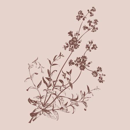 herbal background: Botanical hand drawn branches with flowers isolated, herbal flowers isolated on beige background vector illustration Stock Photo