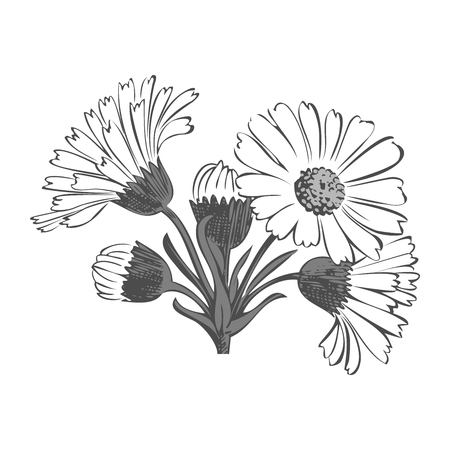 dashes: Hand drawn bouquet of daisy flowers isolated on white background, black and white colors. Vector illustration