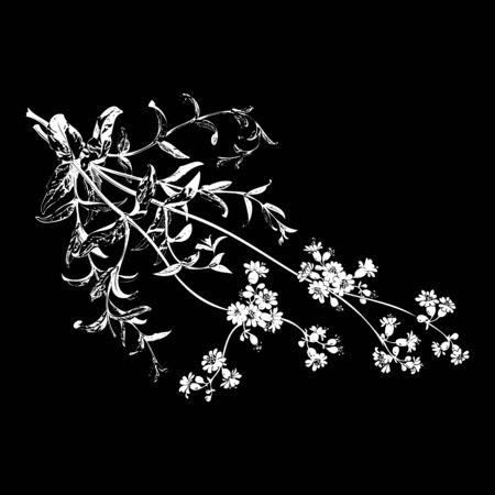 herbal background: Botanical hand drawn branches with flowers isolated, herbal flowers isolated on black background vector illustration