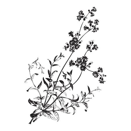 herbal background: Botanical hand drawn branches with flowers isolated, herbal flowers isolated on white background vector illustration Stock Photo
